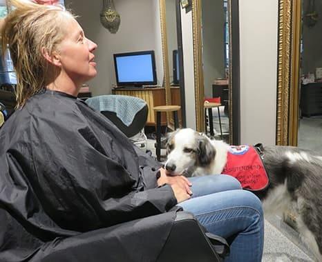 Assistenzhund Matze beim Friseur