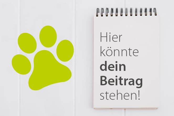 Hundeblogger Aktion - Hunde als Helfer