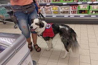 Assistenzhund im Supermarkt