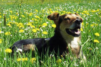 futalis Fotowettbewerb Hund des Monats April 15