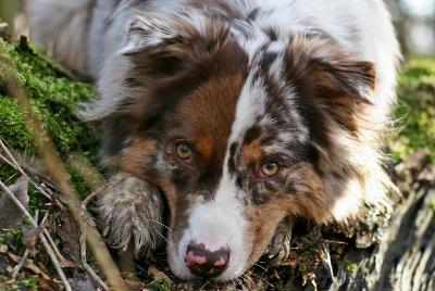 futalis Fotowettbewerb Hund des Monats Mrz 15