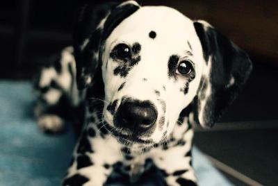 futalis Fotowettbewerb Hund des Monats Mai 15