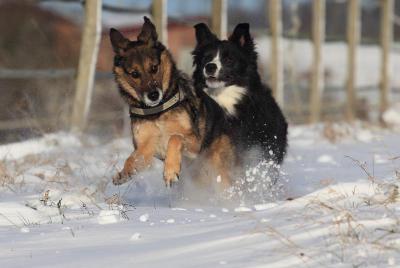 futalis Fotowettbewerb Hund des Monats Februar 15