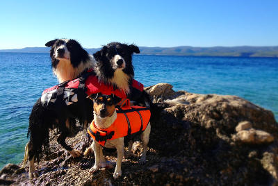 futalis Fotowettbewerb Hund des Monats August 15