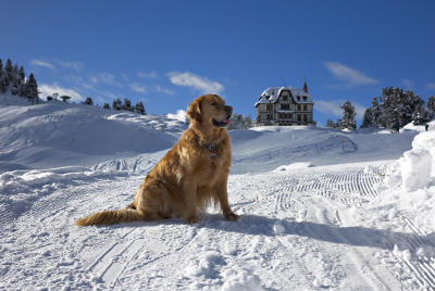 futalis Fotowettbewerb Hund des Monats Jan 15