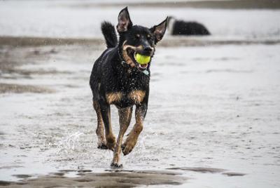 futalis Fotowettbewerb Hund des Monats September 15