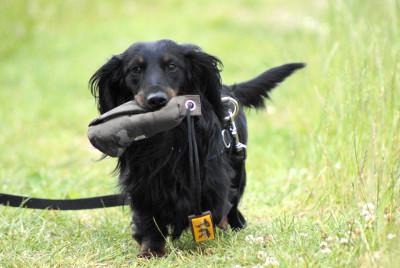 futalis Fotowettbewerb Hund des Monats Juni 15