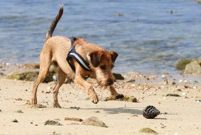 futalis Fotowettbewerb Hund des Monats Juli 15