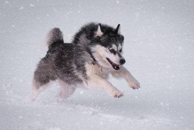 futalis Fotowettbewerb Hund des Monats Dezember 15