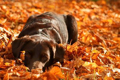futalis Fotowettbewerb Hund des Monats November 15