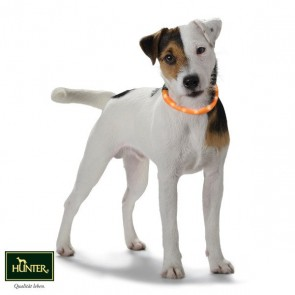 Hunter Leuchtschlauch für Hunde Yukon