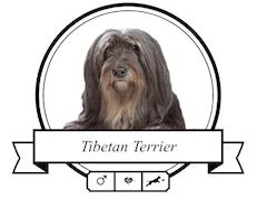 Tibet Terrier Futter für rassespezifische Krankheiten
