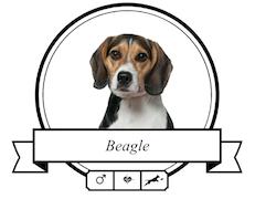 Beagle Futter für rassespezifische Krankheiten