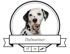 Dalmatiner Futter für rassespezifische Krankheiten