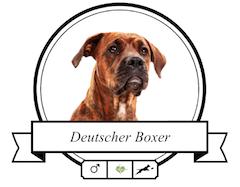 Deutscher Boxer Futter für rassespezifische Krankheiten