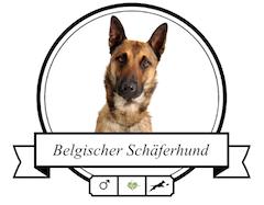 Belgischer Schäferhund Futter für rassespezifische Krankheiten