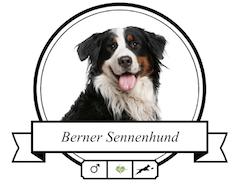Berner Sennenhund Futter für rassespezifische Krankheiten