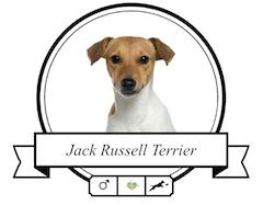 Jack Russell Terrier Futter für rassespezifische Krankheiten