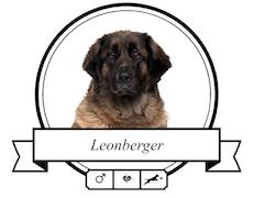 Leonberger Futter für rassespezifische Krankheiten
