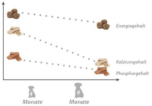 Kalzium und Phosphor Verhältnis bei der Welpenernährung