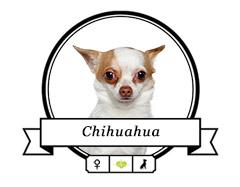 Banderole Chihuahua