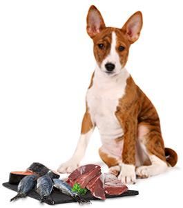 Spurenelemente für Hunde