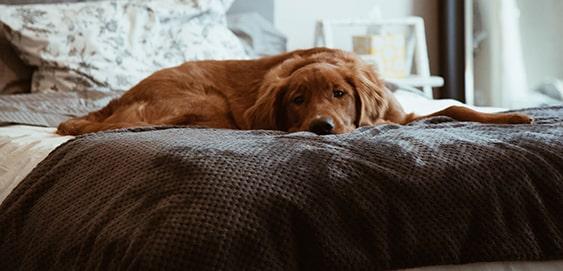 Hund mit Epilepsie - was tun?