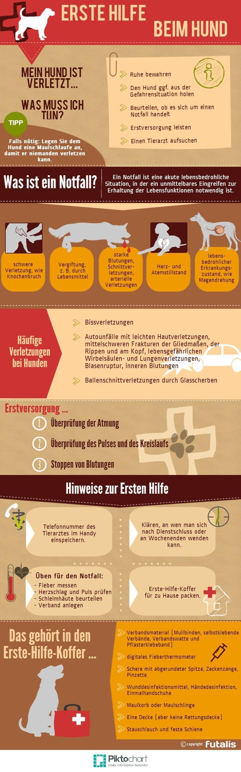 Erste Hilfe beim Hund: Infografik