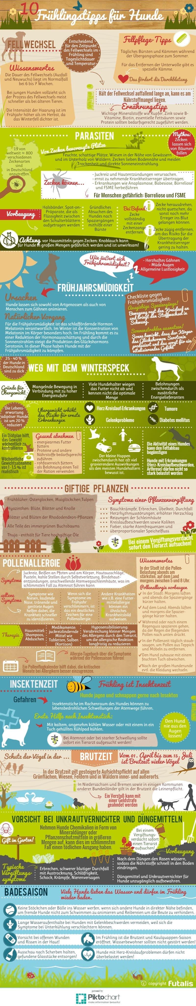 Infografik: Tipps für den Frühling mit Hund