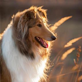 Futter bei Fell- und Hautprobleme beim Hund