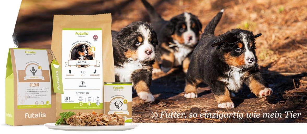 10 Herbst Und Wintertipps Für Hunde Infografik Futalisde