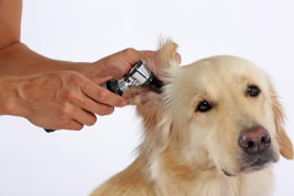 Ernährungsbedingte Probleme bei Hunden