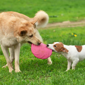 Hund Frisbee