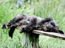 Ältere Hunde schlafen mehr und benötigen weniger Energie