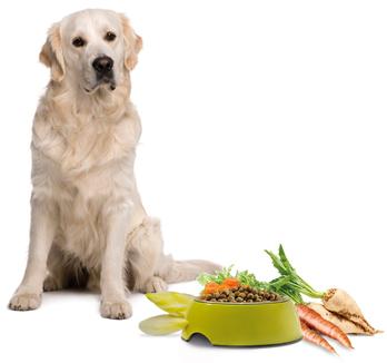 Faserstoffe im Hundefutter