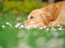 Fastentag Hund - Expertenantwort