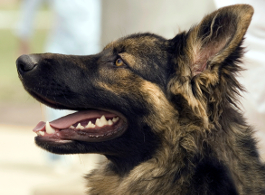 Nahrungsergänzungsmittel für Hunde - Expertenantwort