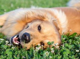Prä- und Probiotika für Hunde