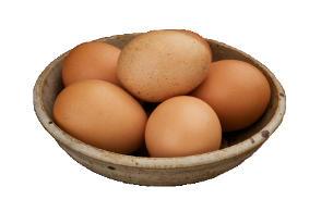 Rohe Eier sind Tabu im Napf