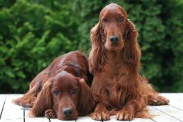 Zink für langhaarige Hunderassen