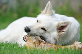 Knochen für Hunde