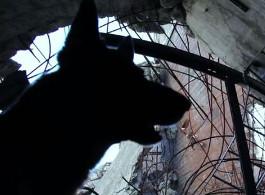 Rettungshund bei der Trümmersuche