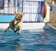 Tauchsport mit Hund