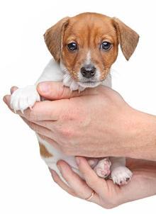Wachstumsstörungen beim Hund und der Einfluss der Ernährung