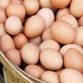 Eier für Hunde