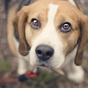 Antijagdtraining für Hunde