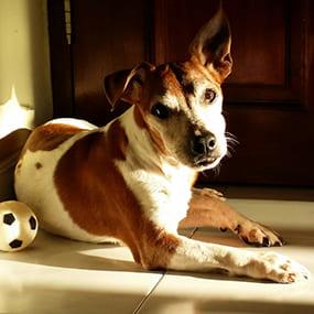 Hund drinnen mit Ball - Hundespiele