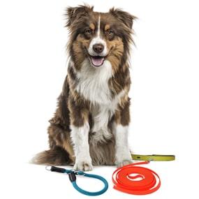 Hund mit Leinen