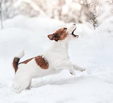 Hund im Winter: Braucht er mehr Futter?