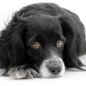 Tumor Beim Hund Der Einfluss Der Ernährung Futalisde